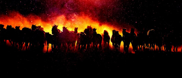 Blazing Group Of Horses Running - Stock Photography