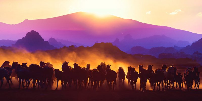 Group-of-Horses-Running-HD-Photo-Montage-03
