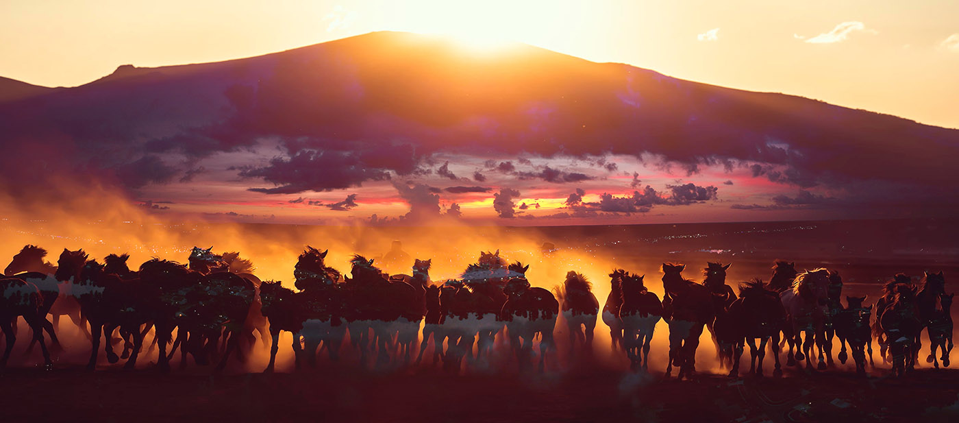 Group of Horses Running HD Photo Montage 04 - Stock Photography