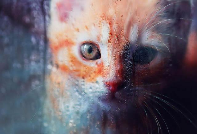Sad Kity Cat Stock Photo - Stock Photography