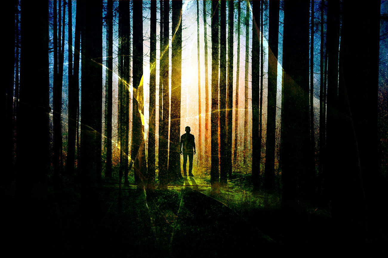 Surreal Apocalyptic Woods 01 - Stock Photography