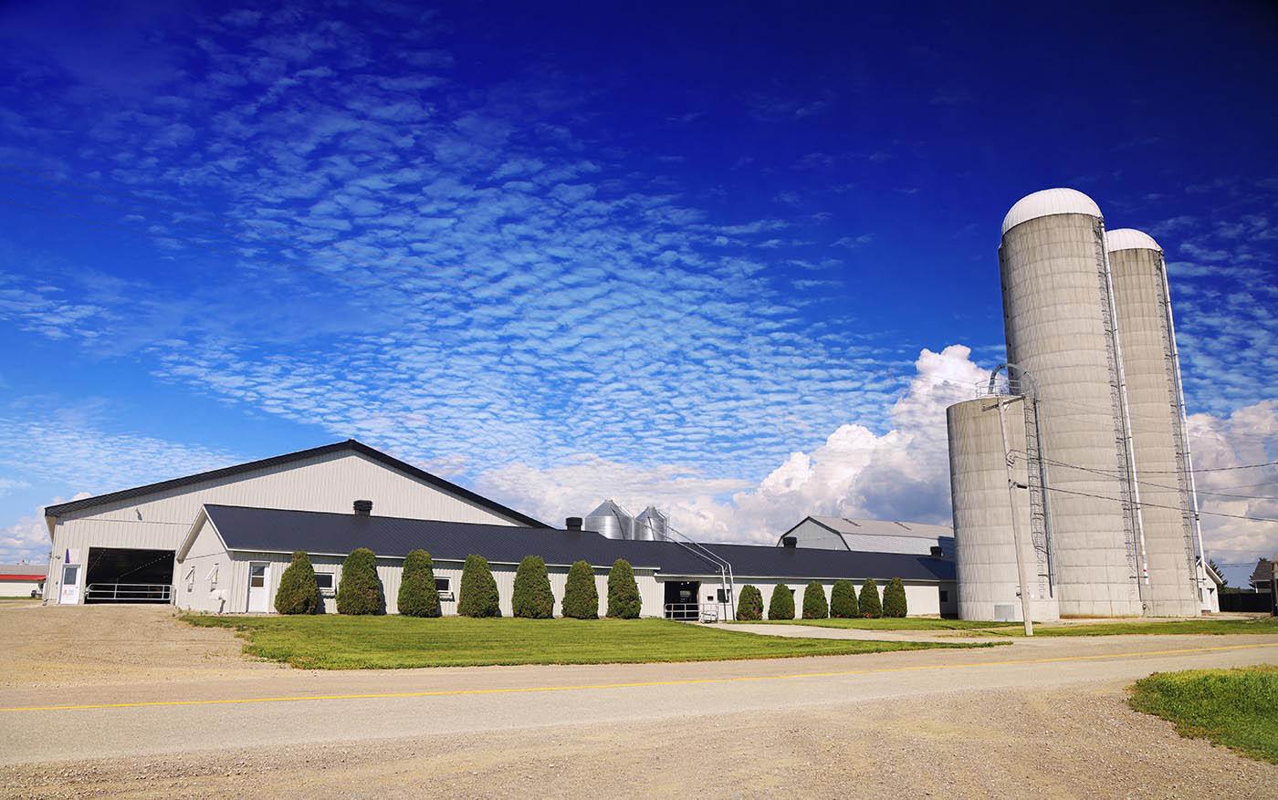 Modern Large Farm with Bulk Grain Storage Silos